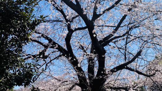 全世界的樱花都一个样的吗?其实可以种种其他的植物也是美丽的,