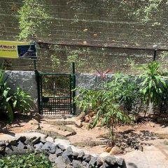 Crocodile Adventureland Langkawi User Photo
