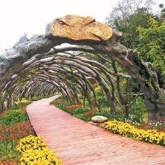 Guangxi Medical Botanical Garden User Photo