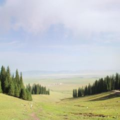 空中草原用戶圖片