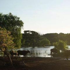 烏達瓦勒韋國家公園用戶圖片