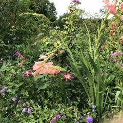 王室藥草花園用戶圖片