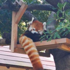 후쿠오카시 동물원 여행 사진