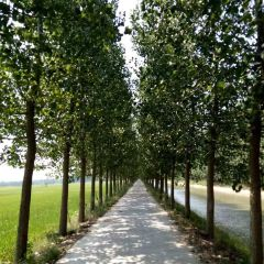 Huanghe Ecological Park User Photo