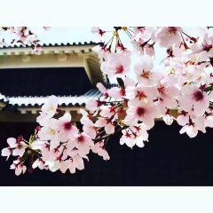 Oni no Yakata User Photo