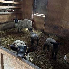 Farms Chiyoda User Photo