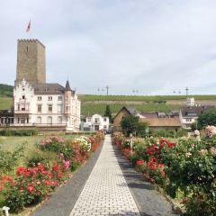 Rudesheim User Photo