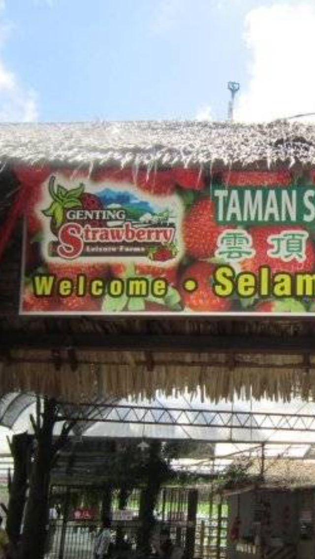 Genting Strawberry Farm