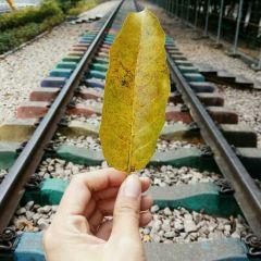 Railroad Park User Photo
