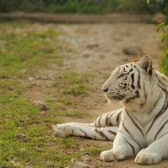 Zoological Wildlife Foundation User Photo