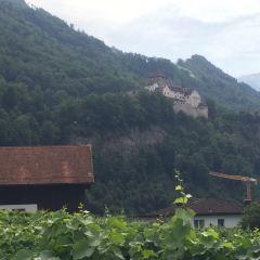 Mitteldorf User Photo