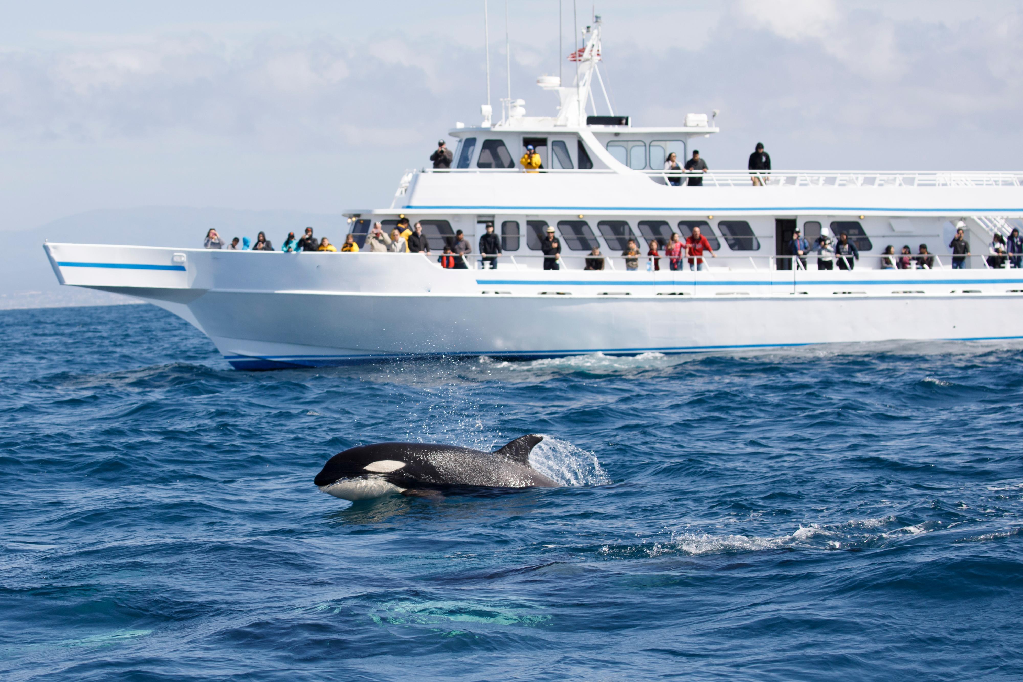 Five Star 鯨魚觀賞遊船票