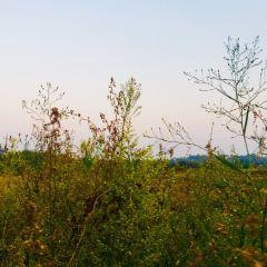 후난 레이수이 국립습지공원 여행 사진