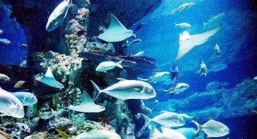 Shijiazhuang Sea World