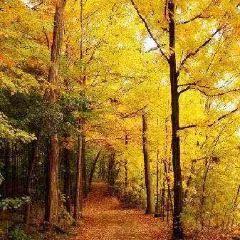 尼加拉公園休閒步道用戶圖片