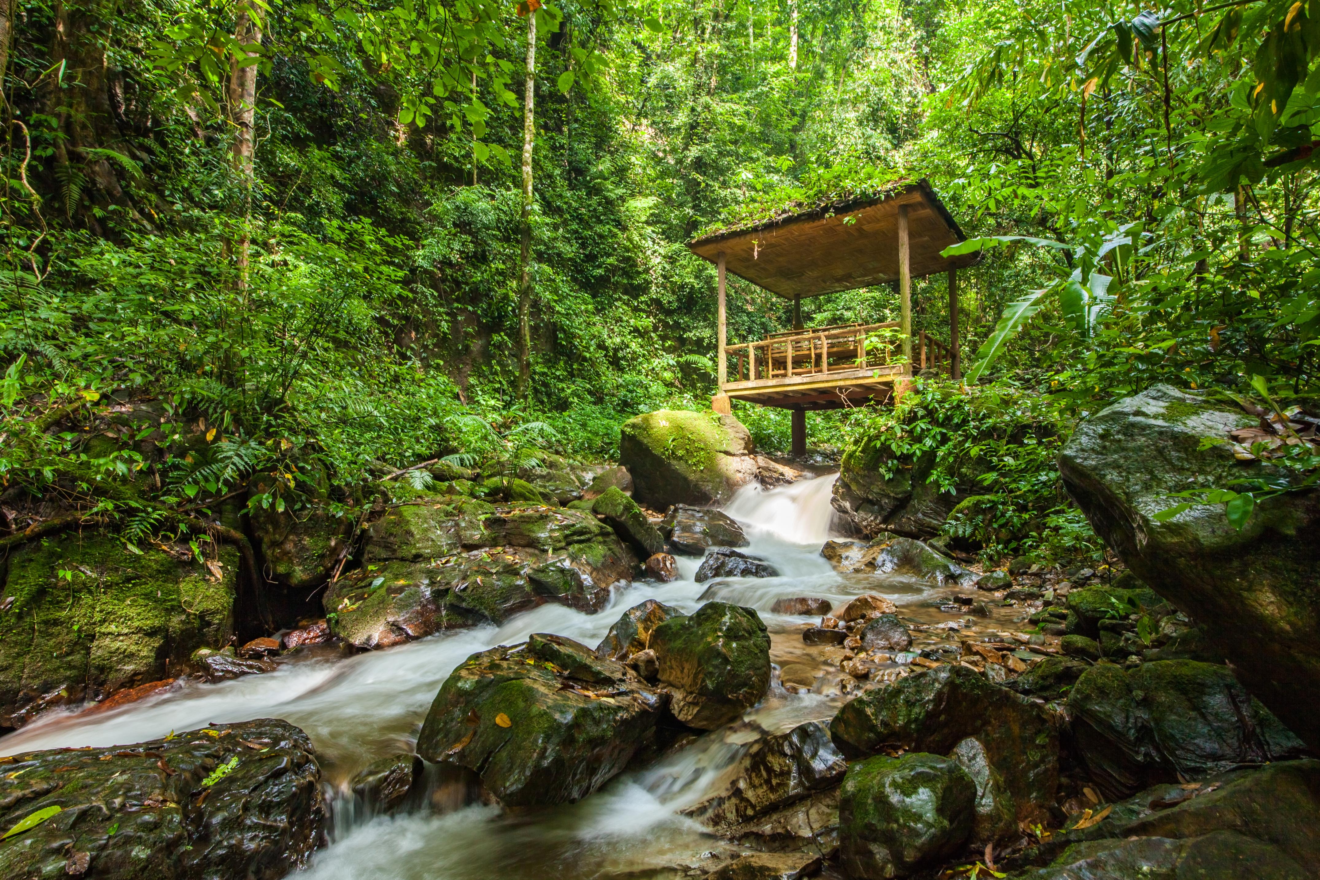 Moli Tropical Rainforest Scenic Area