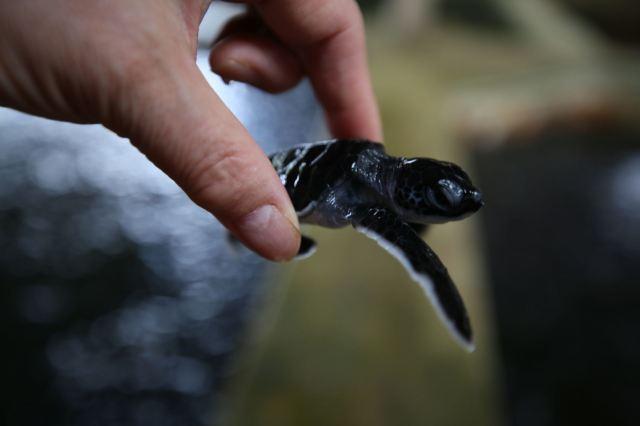 海龜孵化場