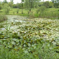 二龍崗生態公園用戶圖片