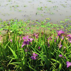 일월담 나비 공원 여행 사진