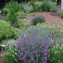 Southsea Rock Gardens用戶圖片