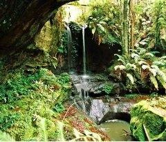 Fern Grotto User Photo