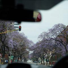 Jacaranda Avenue User Photo