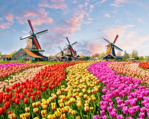 Top-6 Can't Miss Attractions in Amsterdam