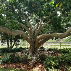 The Royal Botanic Garden Sydney User Photo