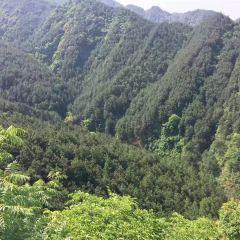 觀音山森林公園用戶圖片