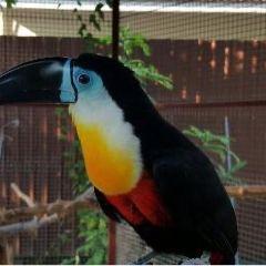 Phuket Bird Paradise User Photo
