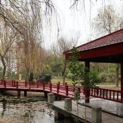 China Yangshu Museum User Photo