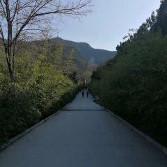 Jinan Panlongshan Forest Park User Photo