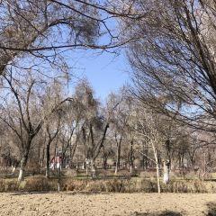 烏魯木齊人民公園用戶圖片