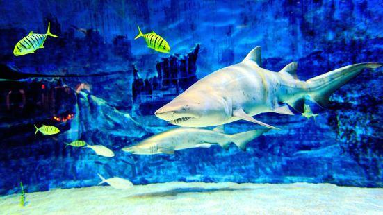 Beijing Aquarium