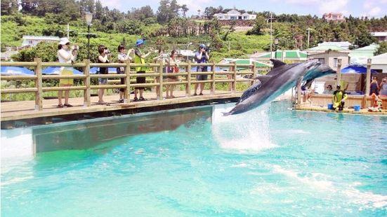 海洋公園Marine Park海豚體驗