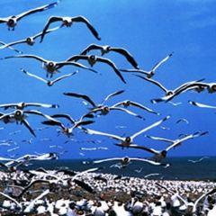 청해호새섬 여행 사진