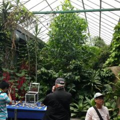 Butterfly Gardens User Photo