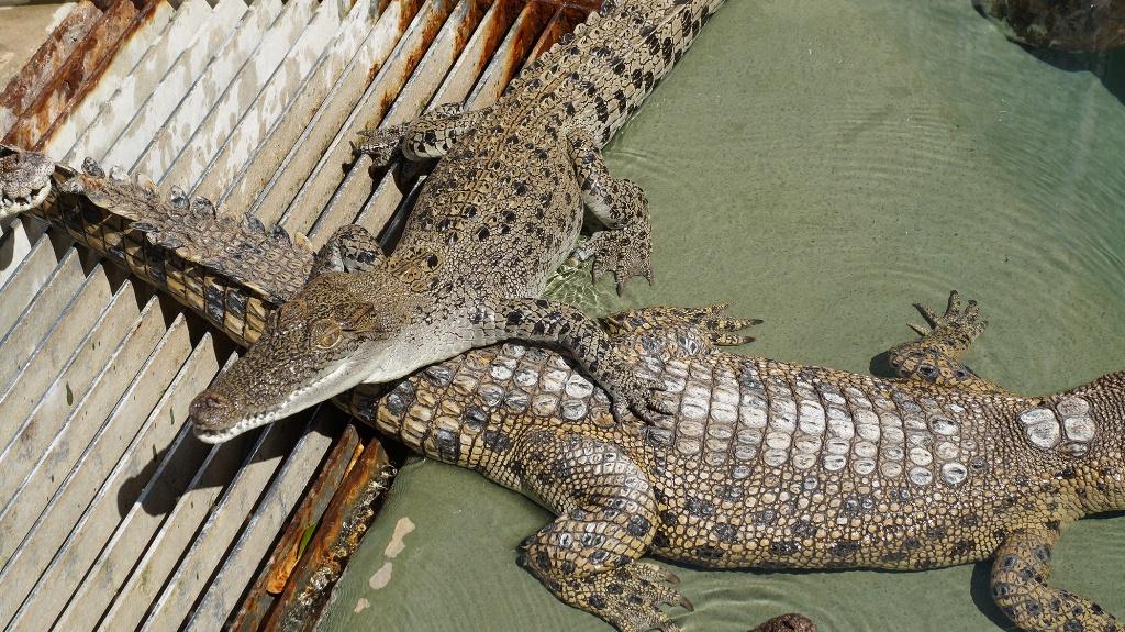 可可洛思鱷魚灣主題公園+落日遊船+皇家飛行博物館+達爾文雙層巴士24小時通行門票