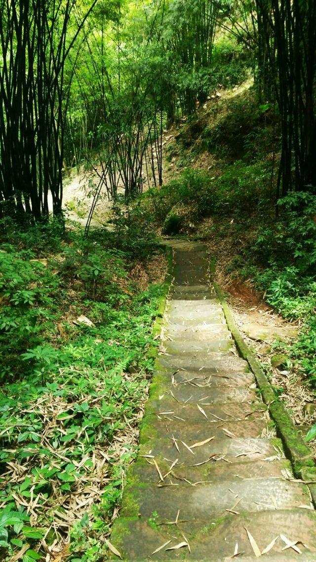 Lugou Bamboo Sea