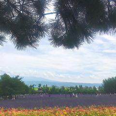 ファーム富田 ラベンダーイーストのユーザー投稿写真