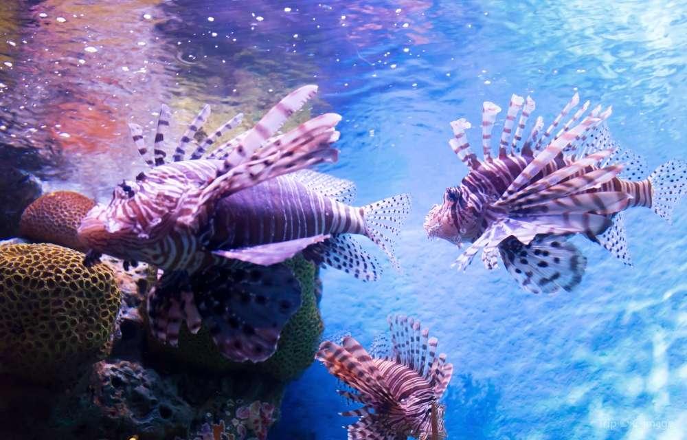 蘇梅島水族館和老虎園