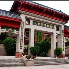 Tianfu Sightseeing Tea Garden User Photo