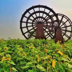Xianludao Gongxiang Farm User Photo