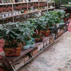 Biling Ecological Village User Photo