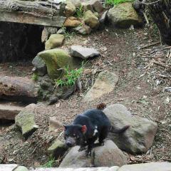 Tasmania Devil Park User Photo