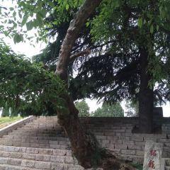 Shegu Platform User Photo