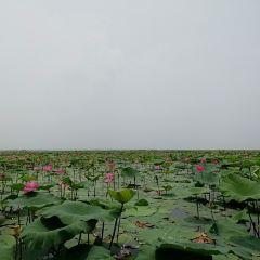 Jiaogang Lake National Wetland Park User Photo