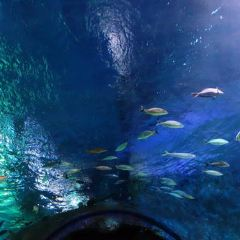 SEA LIFE 올랜도 수족관 여행 사진