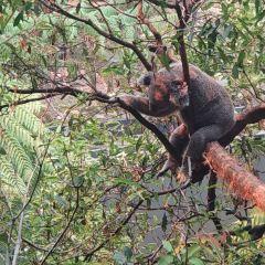 塔龍加動物園用戶圖片