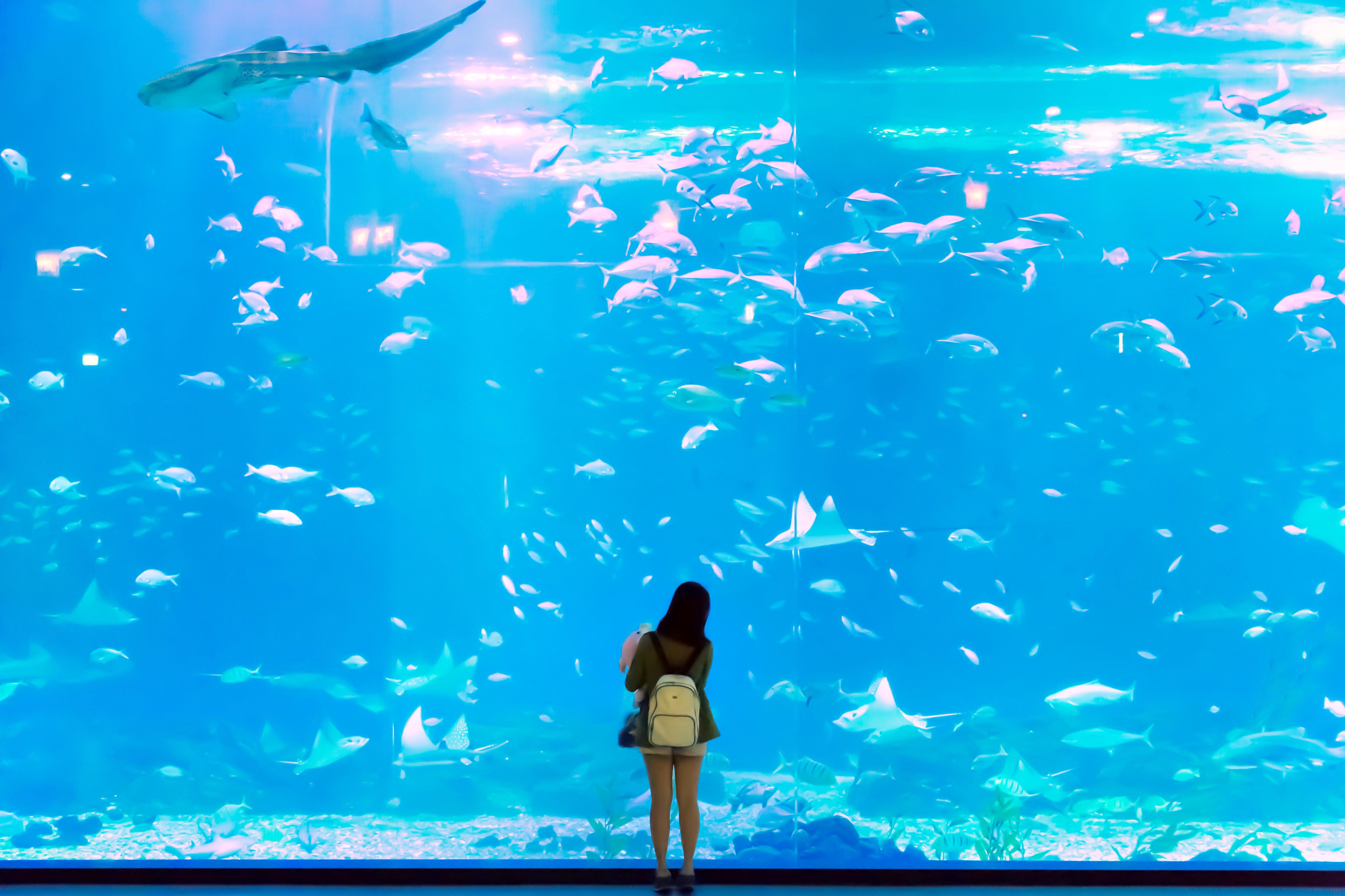 Aqua planet水族館